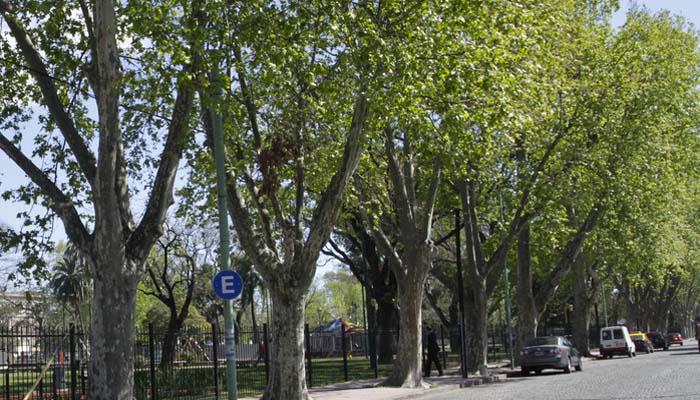El valor del arbolado urbano en la ciudad de Buenos Aires